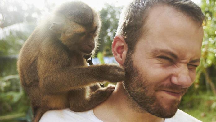 man and monkey