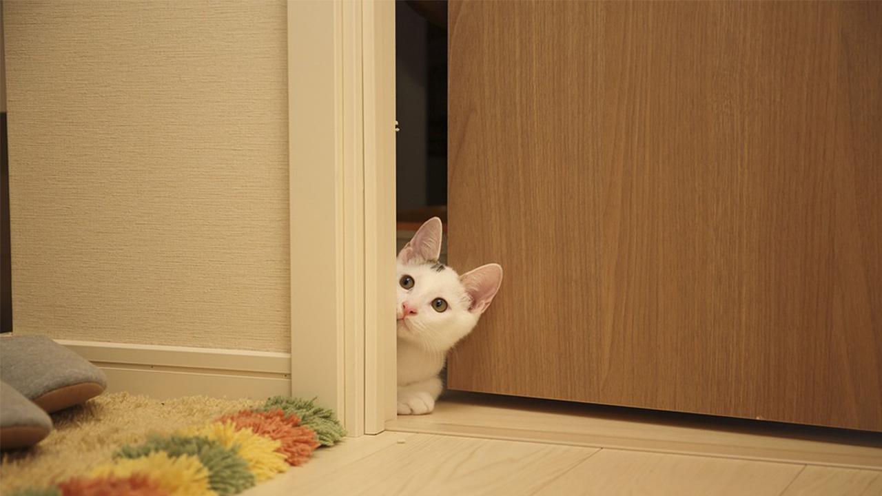 cat peeking door